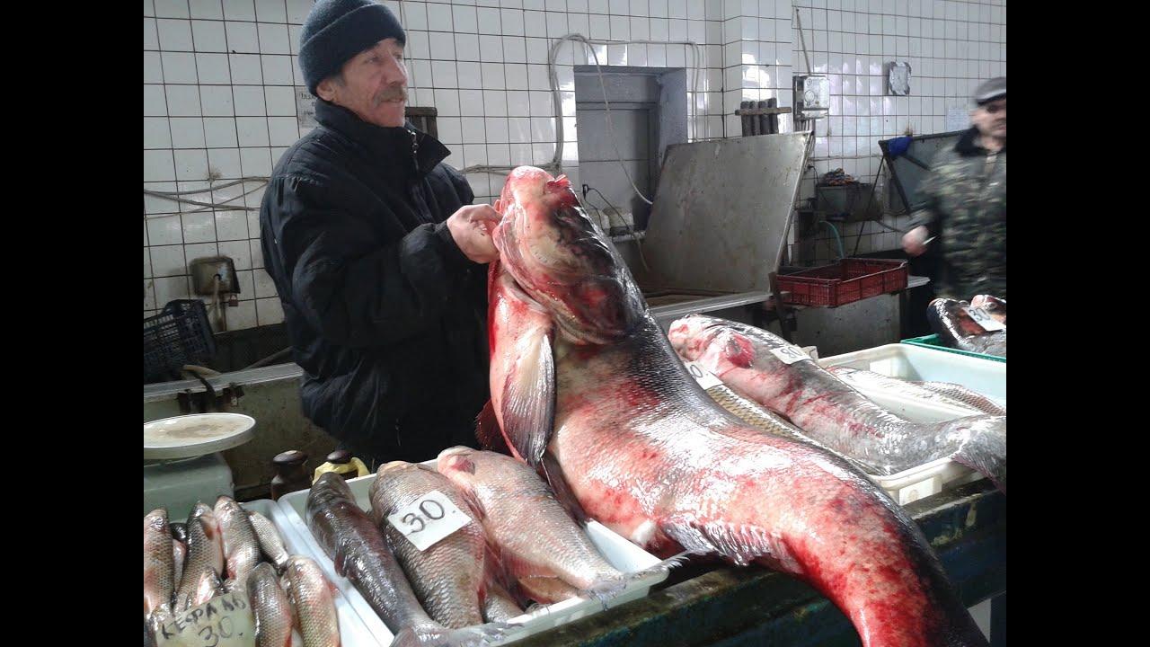 толстолобик что за рыба много ли костей