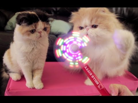 Cheezburger : Kittehs Play With Fan