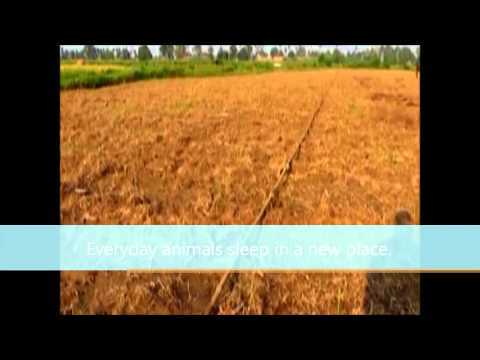 India's Century Old Traditional Farming