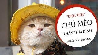 Gặp chú mèo Hoàng Thượng cute nhất Hải Phòng