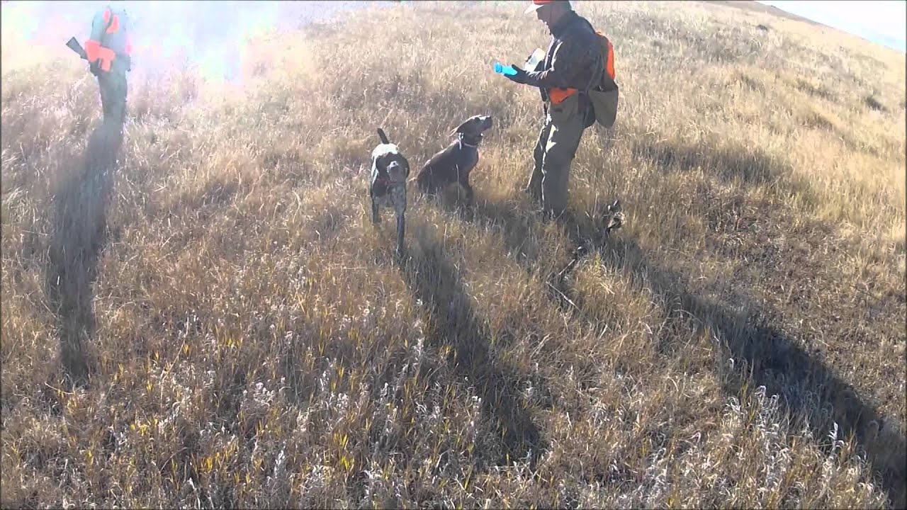 Montana upland hunting 2012 youtube for Montana out of state fishing license