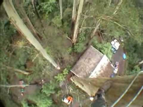 Tree felling with Helmet Camera