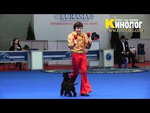 03 Dog Show Eurasia  2012 / Russia / Moscow. Freestyle.