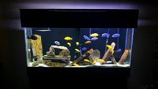 Mbuna Aquarium Setup - Gorgeous African Cichlid Aquarium!! (TBTT #3)