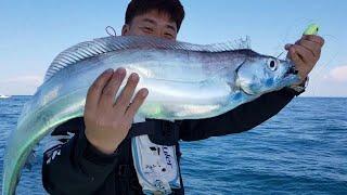 10지대물갈치도 하루몇마리 잡히는이곳~!!터트린게더많았다!  king hairtail fishing