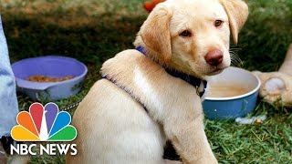 National Puppy Day Reminds Us Of The Benefits Of Dogs | NBC News