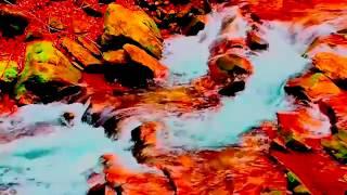 DOĞA Manzaraları HD - Dinlendirici Video 31 DAKİKA