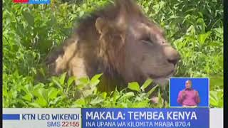 Tembea Kenya: Mbuga la wanyama la Meru