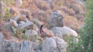 Suspect Running From Riverside Police Officers Falls Face First Into Rocks on Hillside: