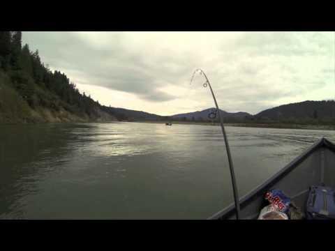 STEELHEAD FISHING EEL RIVER
