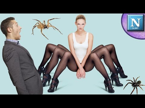 11 Crazy Spider Facts