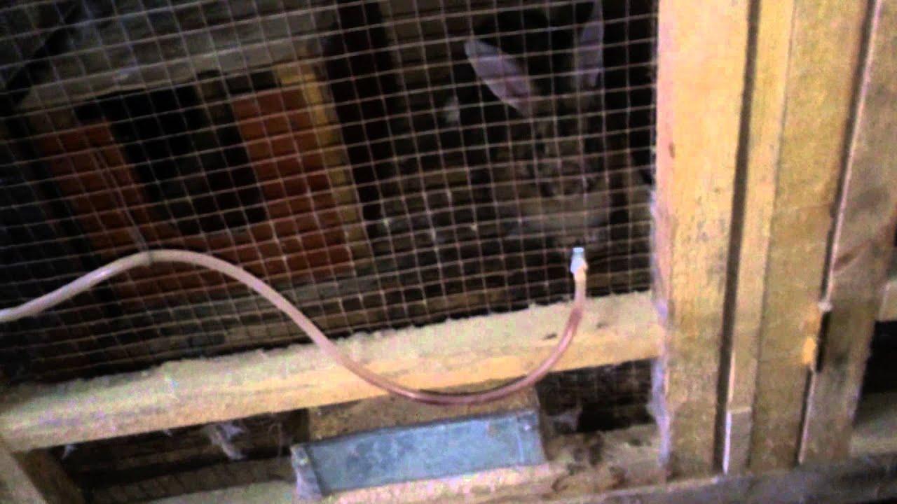 Как сделать автопоилку для кроликов. Кролики 35