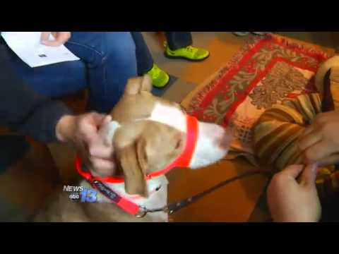 Dogs Adopted During Speed Dating