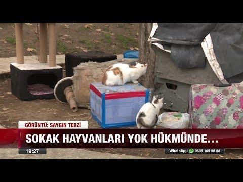 Kediye vuran askerin terhisi uzadı - 5 Aralık 2017