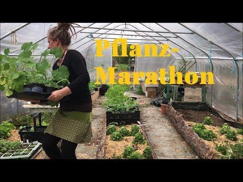 Marathon Im Mai-Garten: Aussäen , Abhärten, Auspflanzen
