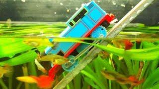 Thomas and Friends Under Water - ESCAPE from AQUARIUM. Tomek ucieka z akwarium