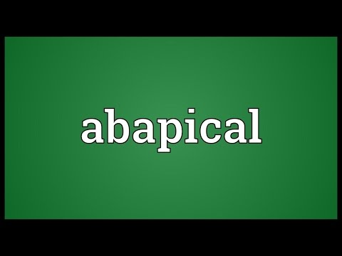 Header of Abapical