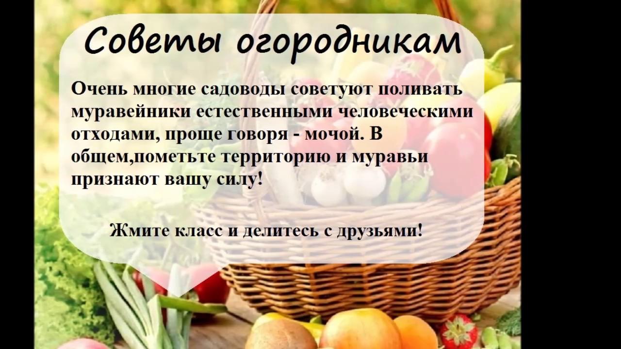 http://i.ytimg.com/vi/Kyt_cO9VbME/maxresdefault.jpg