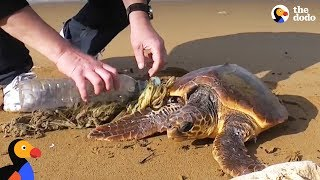 Guys Use Lighter to Rescue Sea Turtle Tangled In Trash | The Dodo