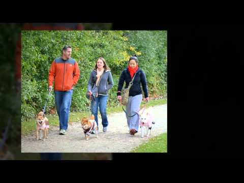 The Puppy Mill Project's Miles for the Mothers in the Mills Pet Walk 2013