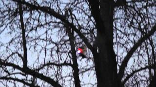 Test flying Syma S107 helicopter