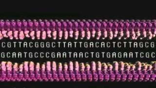 DNA Transcription, Translation, Replication