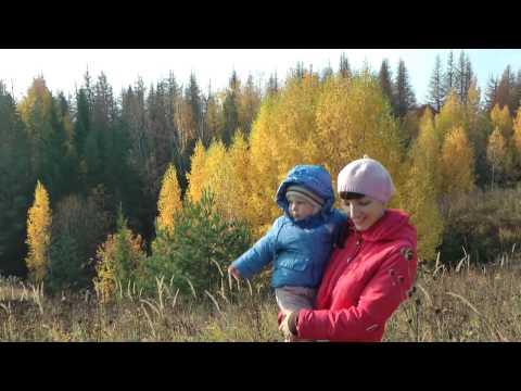 видео сбора белых грибов в коми
