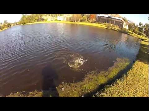 Winter Largemouth Bass Fishing with Flukes