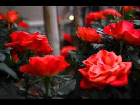 fleur rouge d 39 amour melina jour youtube. Black Bedroom Furniture Sets. Home Design Ideas