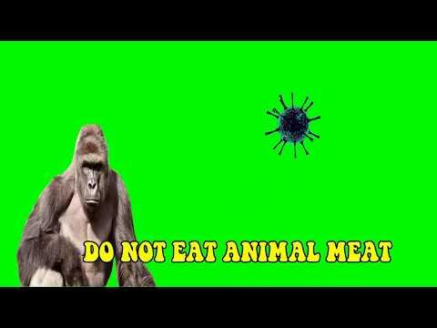 Prevent corona virus, Do not eat animals, Do not drink alcohol