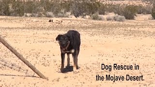 Epic Mojave Desert Dog Rescue Mission - A MUST SEE.  Please Share.