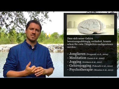 Psychologie: Machen Computerspiele intelligent (oder dumm)?