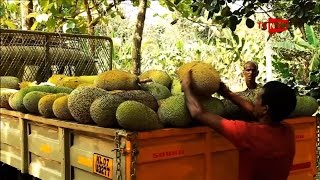 See The Man Who Introduces Jack Fruit @ 365 - We Salute | Tv New