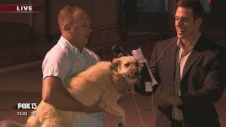 Live on TV: Florida solider reunited with dog he adopted in Iraq