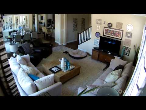Dropcam | Caught in the Act