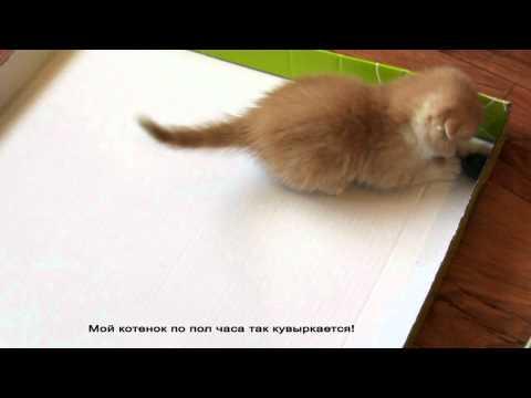 Как сделать игрушку для котенка видео своими руками