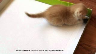 Гениальная игрушка для котенка