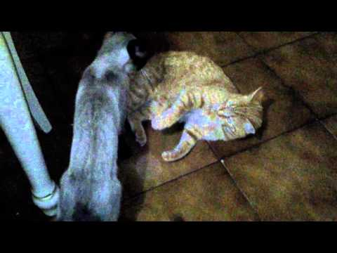 Training cat: submission MMA. Image 1