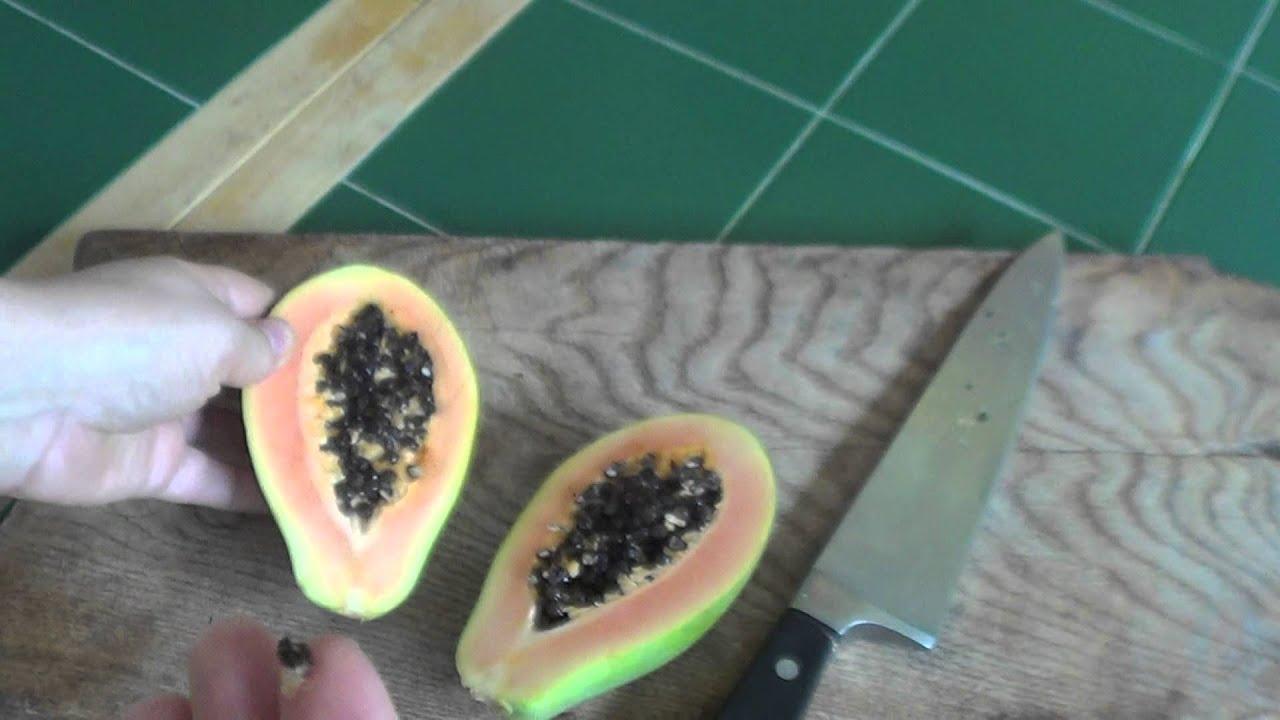 Как вырастить папайю из семян в домашних условиях 592