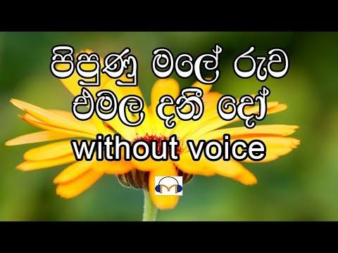pipunu male ruwa (without voice) පිපුණු මලේ රුව එමල දනීදෝ