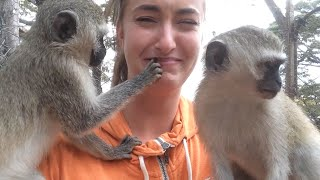 Monkey Business at Twala Trust Animal Sanctuary - part 2