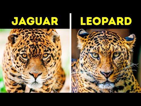 Diese Tiere verwechselst du jedes Mal
