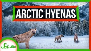 Hyenas Once Lived in the Frigid Arctic