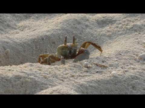 Tiere auf den Malediven