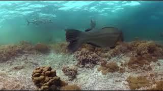 பவளப் பாறைகளை வட்டமிடும் மீன்கள் கூட்டம் - 360 டிகிரி காணொளி