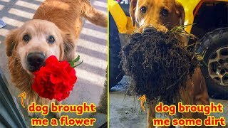 Pets Brought Their Owners The Most Unexpected Gifts