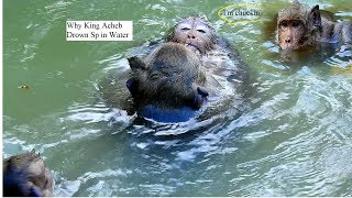 P2So Pity Poor Monkey Sweetpea why old King Acheb Drown SP in Water/Sp nearly Drowning/BBTimo Monkey