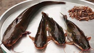 Indonesian Street Food – Fried Catfish Pecel Lele