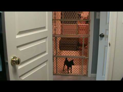 Dog Climbs Fence - KeepBusy.net