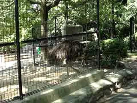 池田動物園のエミュー
